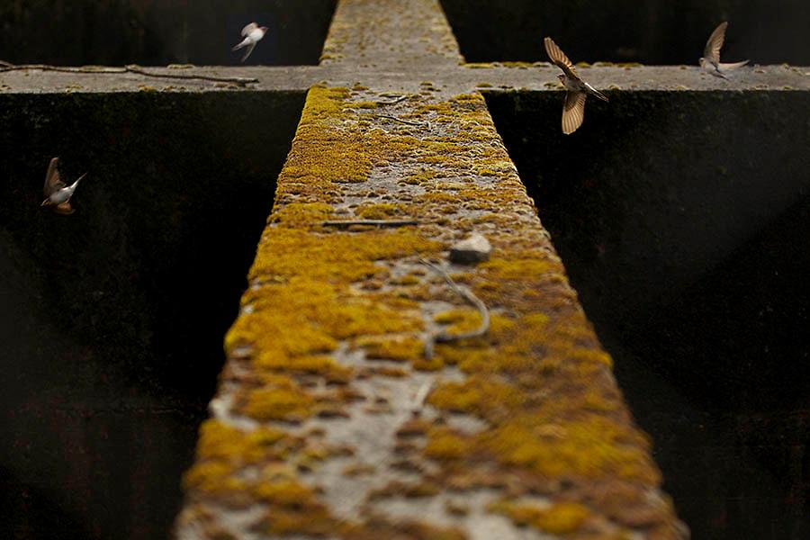 Image Ref: A075<br /> Location: Silvan Reservoir<br /> Date of Shot: 9th Dec 2013