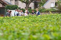 Vineyard. Domaine Bertagna, Vougeot, Cote de Nuits, d'Or, Burgundy, France
