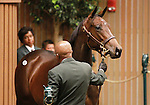 September 10, 2014: Hip #491 Distorted Humor- Bonnie Blue Flag filly consigned by Taylor Made Sales, sold for $435,000 at the Keeneland September Yearling Sale.   Candice Chavez/ESW/CSM