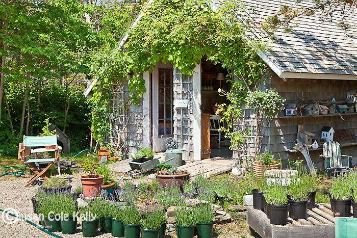 The Lavender Farm in Harwich, Cape Cod, MA, USA