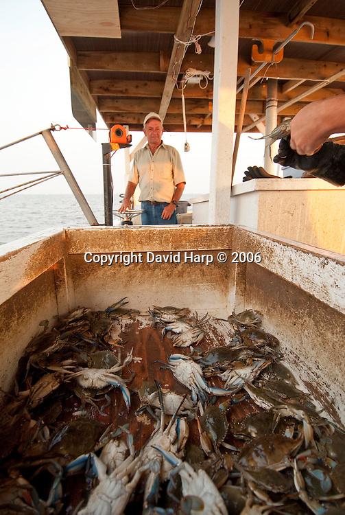 Trotline crabbing on the Nanticoke River