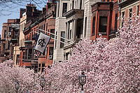 magnolia, Commonwealth Avenue, Boston, MA Algonquin Club