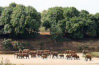 Perhaps the largest herd of elephants I've ever seen, we counted over forty individuals in this Kruger family.