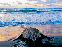 leatherback sea turtle, Dermochelys coriacea, returning to sea at dawn, Dominica, Caribbean, Atlantic Ocean