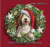 Marcello, CHRISTMAS ANIMALS, WEIHNACHTEN TIERE, NAVIDAD ANIMALES, paintings+++++,ITMCXM2001A,#XA# ,dogs,puppies ,christmas wreath
