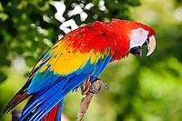 Parrots by Peter Wochniak