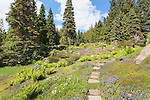 Stone path through alpine botanical garden.  Ohme Gardens, Wenatchee, Chelan County, Washington, USA.