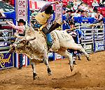 January 2009: Bullrider Logan Knibbe rides Magic Man at the CBR World Championships in Las Vegas