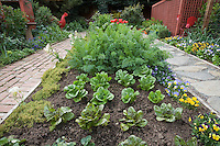 Pathways flanking mounded organic soil mixed vegetable bed with baby lettuces, herbs and flowers in Rosalind Creasy front yard garden