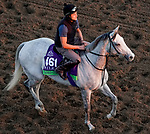 October 31, 2019: Breeders' Cup Mile entrant Lord Glitters, trained by David O'Meara, exercises in preparation for the Breeders' Cup World Championships at Santa Anita Park in Arcadia, California on October 31, 2019.John Voorhees/Eclipse Sportswire/Breeders' Cup/CSM