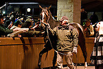 06 December 2010.  Zenyatta bids her fans farewell at Keeneland Racecourse.  She arrived at the Bluegrass Airport around 6pm, and vanned straight to Keeneland where she paraded in the covered walking ring behind the sales pavillion.   Afterwards, she left for her new home at Lane's End Farm in Versailles, Ky.