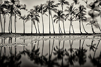 Pond reflecting palm trees. Black Sand Beach. Hawaii, The Big Island