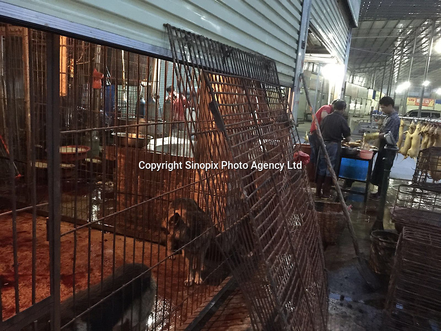 Dogs are seen for sale in Yulin, one day before the Yulin Dog Meat Festival kicks off, Yulin, Guangxi Province, China, 20 June 2016.<br /> <br /> Peter Li / Humane Society International-Sinopix