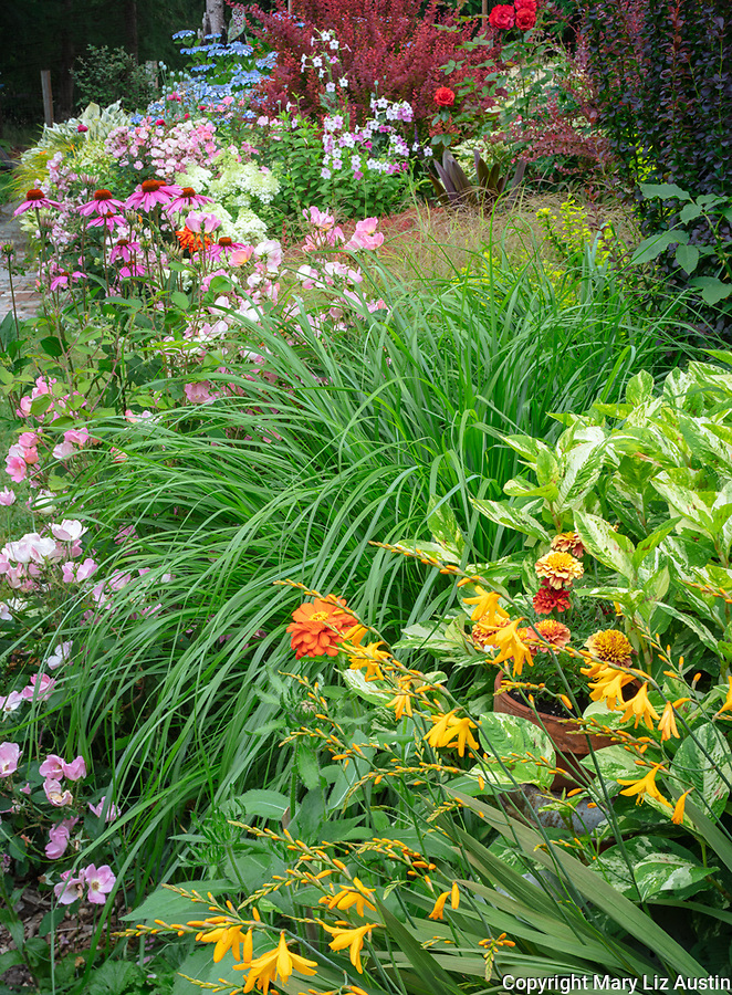 Vashon-Maury Island, WA: Summer perennial garden with crocosmia; persicaria; pennisetum; echinacea, roses and barberries