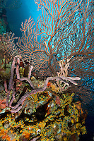 Reef Scenic<br /> Boulders <br /> Grenadines