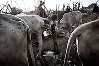 South Sudan. 24 March 2011...The cow's urine is collected and can be used for different causes: from hair dyes to which it provides a rust brown color, to quench the thirst in extreme cases..