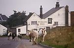 Horses grazing on Common land Tilbury Essex Thames Estuary Worlds End Pub .1990s 1991 UK