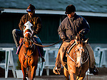 Optimizer, trained by D. Wayne Lukas and to be ridden by Robby Albarado exercises in preparation for the 2011 Breeders' Cup at Churchill Downs on November 1, 2011.