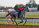 October 23, 2015: Tap To It, trained by Ralph Nicks, and owned by Whisper Hill Farm, is entered in the Breeder's Cup 14 Hands Winery Juvenile Fillies. Candice Chavez/ESW/CSM
