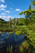 Zealand Pond in the White Mountains, New Hampshire during the summer months. This pond is located on the side of the Zealand Trail and is possibly the location of an old logging camp and railroad yard from the Zealand Valley Railroad, which was a logging railroad in operation from 1884-1897(+/-). Parts of the Zealand Trail follows the old railroad bed.