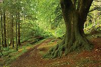 The Cruach Tairbeirt Loop near Arrochar, Loch Lomond and the Trossachs National Park, Argyll & Bute