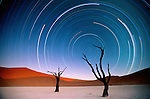 Star trails over camel thorn (Vachellia erioloba), Namib-Naukluft Park, Namibia<br />