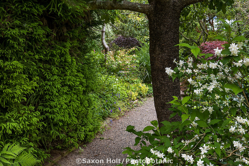 Gravel path into garden between shrubs, Gary Ratway garden