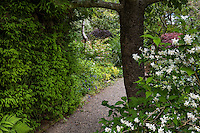 Gravel path into garden between shrubs, Gary Ratway garden