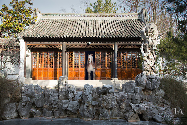 Surreal fantasy photo of a horse peeking out from inside a building in the Chinese Scholar's Garden in Staten Island, NY.