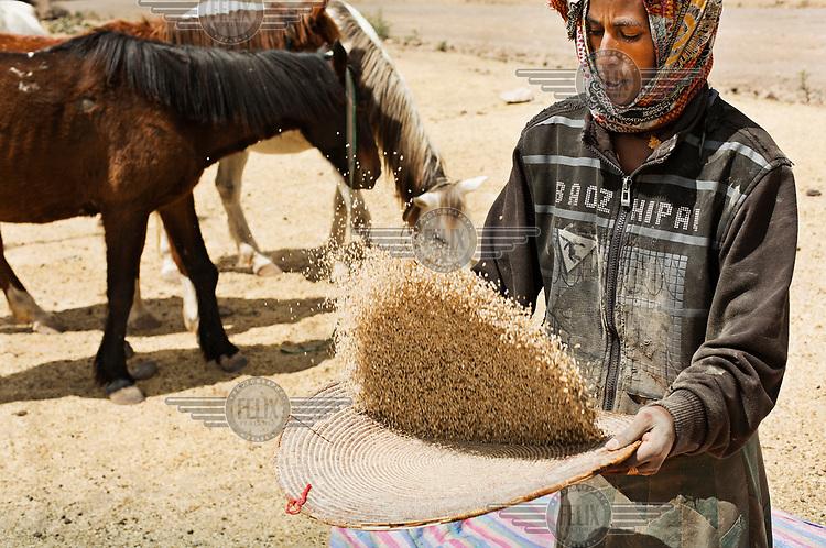 A man winnowing wheat seed.