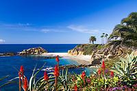 White sand Treasure Island beach, turquoise Pacific Ocean, palm trees, and seagulls, with red aloes in the foreground, in Laguna Beach, California
