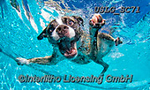 REALISTIC ANIMALS, REALISTISCHE TIERE, ANIMALES REALISTICOS, dogs, paintings+++++SethC_Wrigley_MG_1190rev,USLGSC71,#A#, EVERYDAY ,underwater dogs,photos,fotos ,Seth