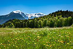 Deutschland, Bayern, Berchtesgadener Land, bei Bischofswiesen: Wandergebiet zwischen Bischofswiesen und Berchtesgaden mit Blick in die Berchtesgadener Alpen mit Hoher Goell und Schneibstein | Germany, Bavaria, Berchtesgadener Land, near Bischofswiesen: hiking area between Bischofswiesen and Berchtesgaden with wiew towards the Berchtesgaden Alps with Hoher Goell and Schneibstein mountains