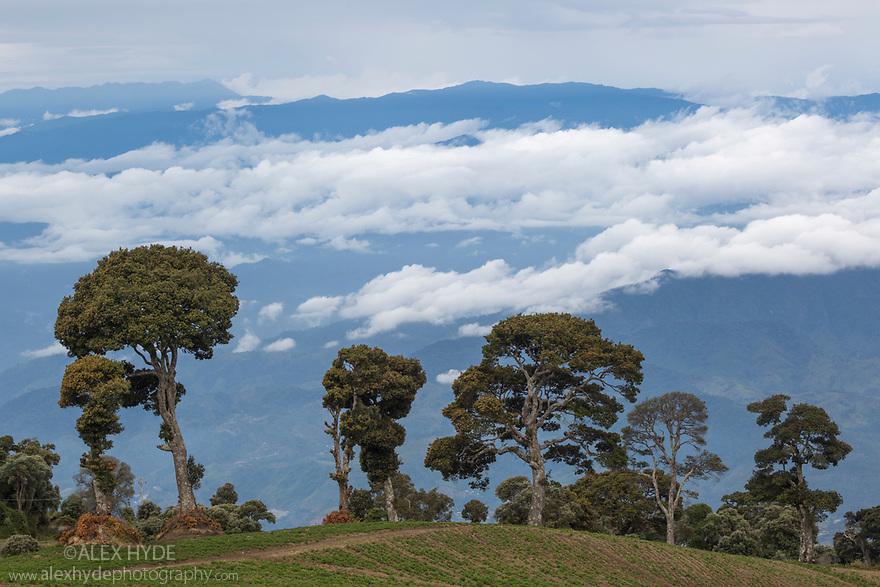 Potato fields on the rich volanic soils on the slopes of Volcano Irazu, Costa Rica. May.