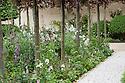 Laurent-Perrier Bicentenary Garden, designed by Arne Maynard, RHS Chelsea Flower Show 2012. Pleached copper beeches underplanted with Delphinium requeneii, white sweet rocket (Hesperis matronalis var. albiflora), Persicaria bistorta 'Superba'.