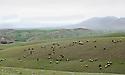 Iraq 2012 Landscape in the region of Akkra, hills , fieds and sheep<br /> Irak 2012  Paysage de la region d' Akkra, collines, champs et moutons