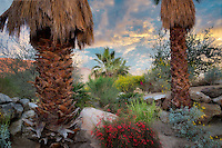 Desert garden. Faye Sarkowsky Sculpture Garden. Palm Desert, California