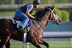 OCT 27 2014:Sayaad, trained by Kiaran McLaughlin, exercises in preparation for the Breeders' Cup Mile at Santa Anita Race Course in Arcadia, California on October 27, 2014. Kazushi Ishida/ESW/CSM