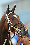 HOT SPRINGS, AR - APRIL 9: Terra Promessa #2, before the running of the Fantasy Stakes at Oaklawn Park on April 9, 2016 in Hot Springs, Arkansas. (Photo by Justin Manning/Elipse Sportwire/Getty Images)
