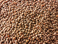 Uncooked brown lentils