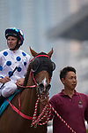 SHA TIN,HONG KONG-MAY 07: Contentment,ridden by Brett Prebble, after winning the Champions Mile at Sha Tin Racecourse on May 7,2017 in Sha Tin,New Territories,Hong Kong (Photo by Kaz Ishida/Eclipse Sportswire/Getty Images)