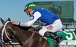 OLDSMAR, FLORIDA - FEBRUARY 13: Tepin  #5, ridden by jockey Julien Leparoux, after winning the Lambholm South Endeavour Stakes at Tampa Bay Downs on February 13, 2016 in Oldsmar, Florida (photo by Doug DeFelice/Eclipse Sportswire/Getty Images)