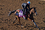 November 3, 2020: Nazuna, trained by trainer Roger Varian, exercises in preparation for the Breeders' Cup Juvenile Fillies Turf at Keeneland Racetrack in Lexington, Kentucky on November 3, 2020. John Voorhees/Eclipse Sportswire/Breeders Cup/CSM