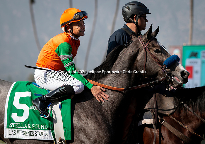 ARCADIA, CA: #5 Stellar Sound before the Grade II Las Virgenes Stakes at Santa Anita Park in Arcadia, California on February 08, 2020.
