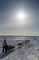 Yuka Honda on the trail a few miles from the finish line in Nome on Saturday March 21, 2015 during Iditarod 2015.  <br /> <br /> (C) Jeff Schultz/SchultzPhoto.com - ALL RIGHTS RESERVED<br />  DUPLICATION  PROHIBITED  WITHOUT  PERMISSION