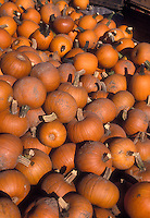 Pile of many orange pumpkins