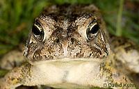 0602-0904  Fowler's Toad, Anaxyrus fowleri [syn: Bufo fowleri (Bufo woodhousii fowleri)]  © David Kuhn/Dwight Kuhn Photography