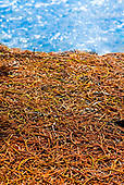 Presqu'île de Kuto, tapis végétal