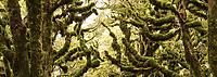 Goblin forest, Te Urewera, Hawke's Bay, North Island, New Zealand, NZ