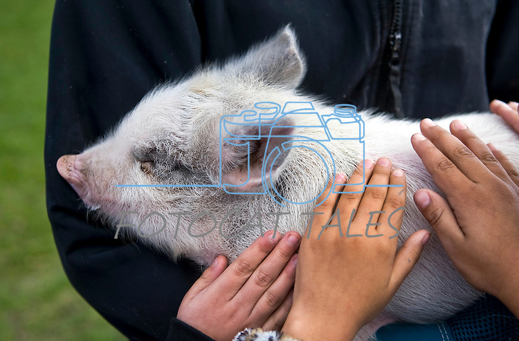 Students at Fremont Elementary School in Carson City, Nev., pet Piggly Wiggly, a six-week-old pig, during a cow plop fundraiser, where they were able to pet local farm animals.<br /> Photo by Candice Nyando